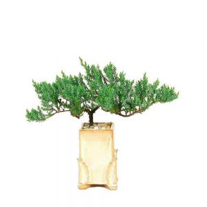Rectangular Angel Wing Vase Bonsai