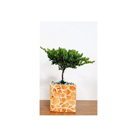 Rectangle Vase Safari Print Bonsai