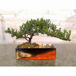 Mosaic Rectangular Vase Bonsai