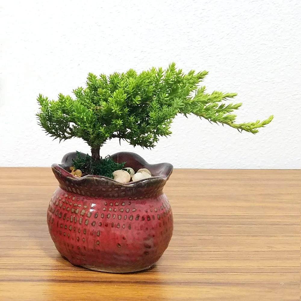 Burlap Vase Bonsai