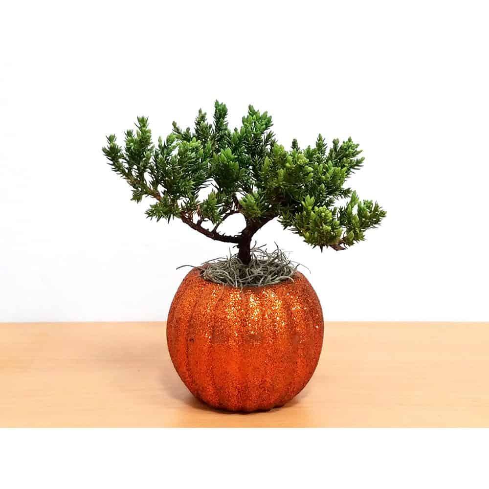 Glittering Pumpkin Bonsai