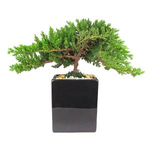 Black Two-Tone Vase 6 inch Bonsai