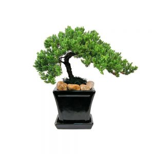 Square with Tray Medium Bonsai
