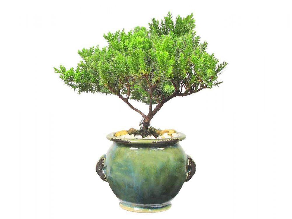 Wholesale Round Stoneware Vase Bonsai