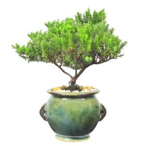 Wholesale Round Stoneware Vase Bonsai