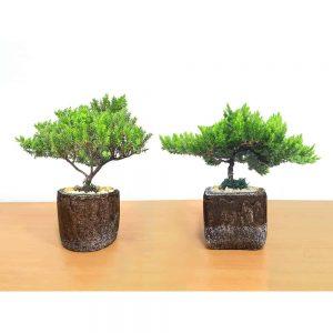 Natural Cement Planter Small Bonsai