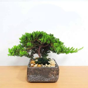 Wholesale Natural Cement Planter Bonsai