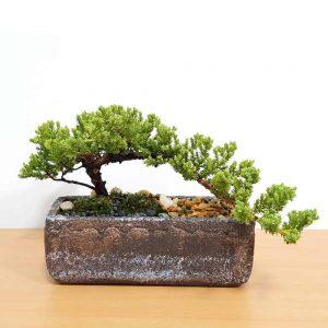 Natural Cement Planter Bonsai
