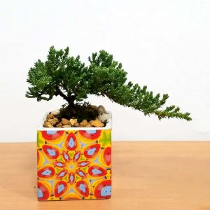 Kaleidoscope Square Pot Bonsai