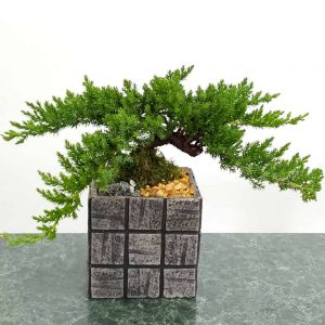 "Wholesale Gray Tile 5"" Square Bonsai"
