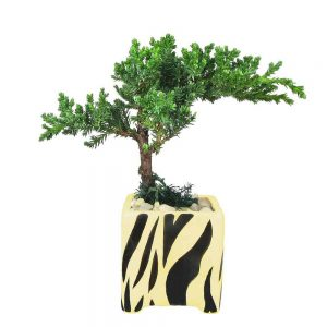 Square Vase Safari Print Bonsai