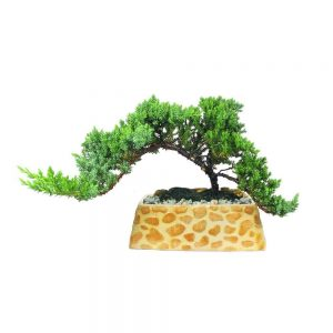 "Rectangular Safari Planter 7"" Bonsai"
