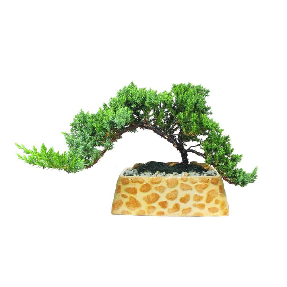 "Rectangular Safari Planter 7"" Bonsai"