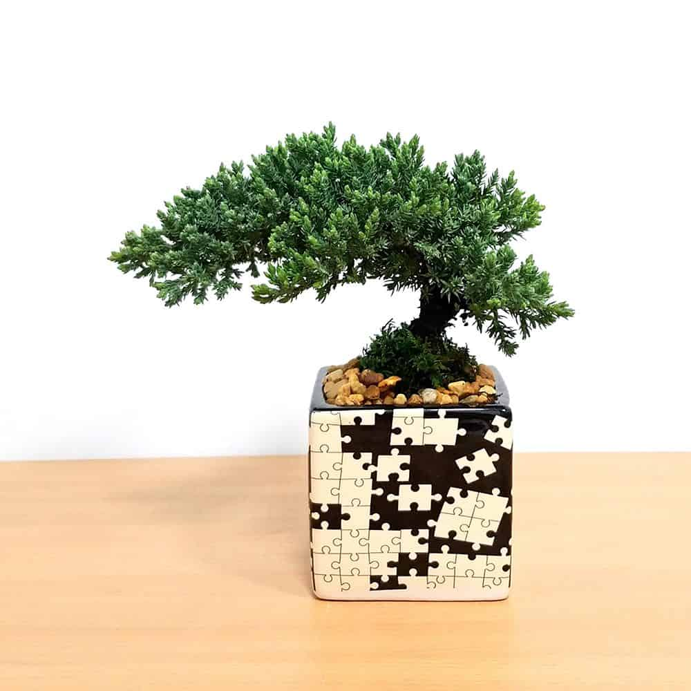 Puzzle Square Black & White Bonsai