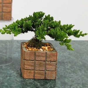 "Bonsai Terracotta Tile 3"" Square"