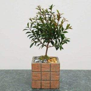 "Wholesale Terracotta Tile 4"" Square Vase Bonsai"