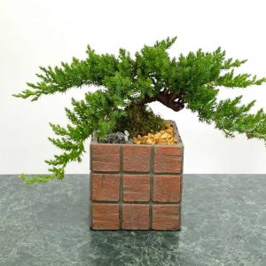 "Wholesale Terracotta Tile 5"" Square Vase Bonsai"