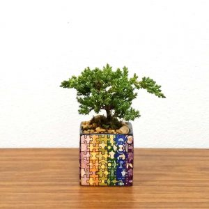 Puzzle Square Color Bonsai