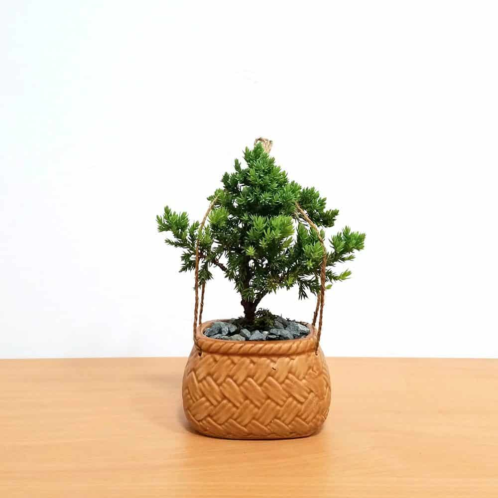 Porcelain Basket Bonsai