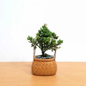 Porcelain Basket Bonsai
