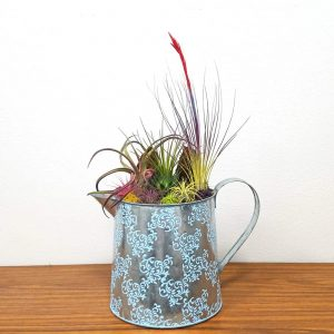 Watering Can Extra-Large Air Plants