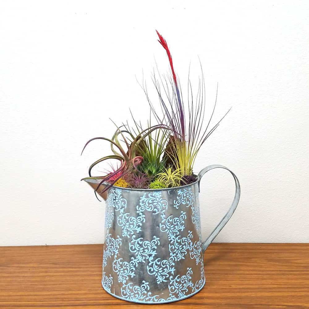 Watering Can Extra Large Air Plants Succulents Pack 4