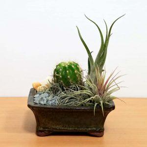 """Dish Garden 5"""" Air Plants, Succulents, Cactus"""
