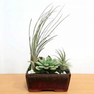 """Dish Garden 6"""" Air Plants, Succulents, Cactus"""