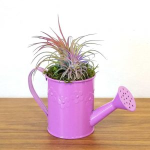Watering Can Small Air Plants & Succulents