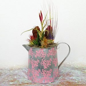 Watering Can Large Air Plants