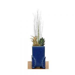 Rectangular Angel Wing Vase Air Plants & Succulents