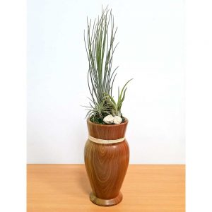 Woodgrain Vase Tall Air Plants
