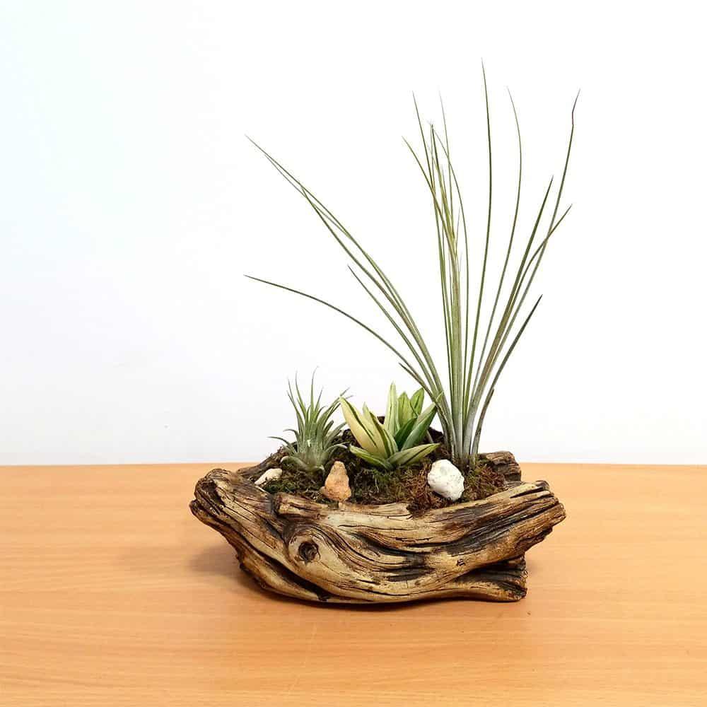 Creative Cement Vase Air Plants