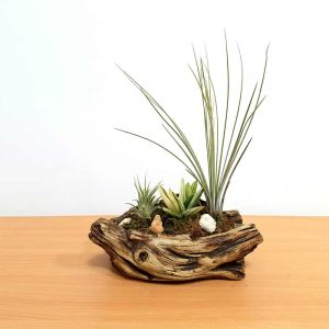 Creative Cement Vase Air Plants