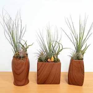 Woodgrain Vase Assortment Air Plants
