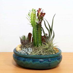 """Dish Garden 8"""" Air Plants, Succulents, Cactus (Pack: 6)"""