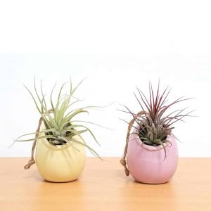 Egg Shell Vase Air Plants