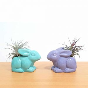 Bunny Vase Air Plants