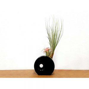 Circular Vase Air Plants & Succulents