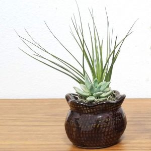 Burlap Vase Air Plants
