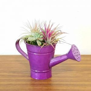 Watering Can Petite Air Plants & Succulents