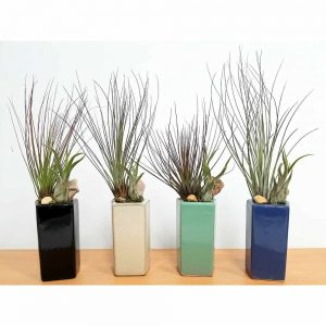 Trapezoid Vase Air Plants