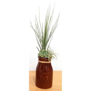 Milk Jug Vase Air Plants