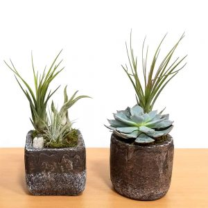 Natural Cement Planter Small Air Plants