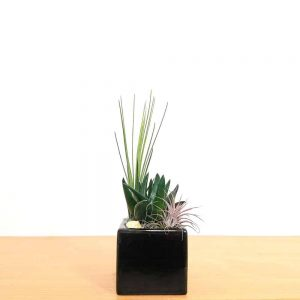 "Square 3"" Air Plants"