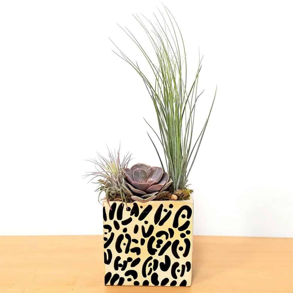 Rectangle Vase Safari Print Air Plants