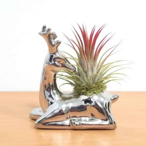 Reindeer Vase Air Plants