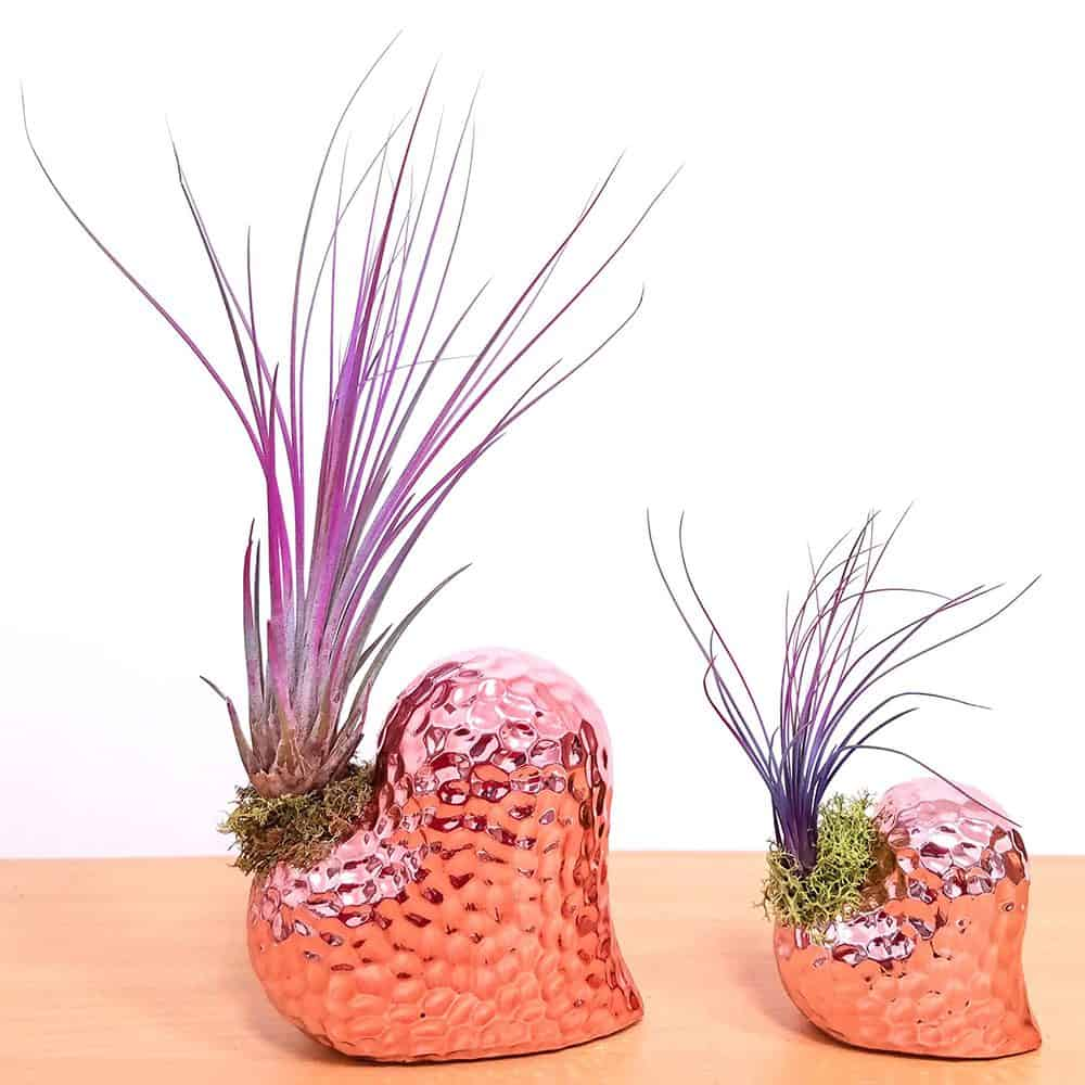 Dimple Heart Vase Air Plants