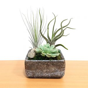 Natural Cement Planter Air Plants & Succulents