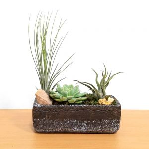 "Natural Cement Planter 8"" x 3"" Air Plants & Succulents"